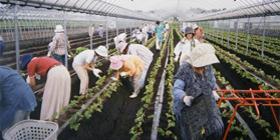 グリーンツーリズム(農業体験)
